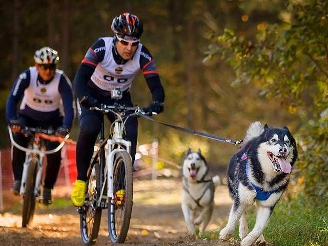 На велосипеде с собакой!