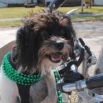 Корзина на велосипед для собаки